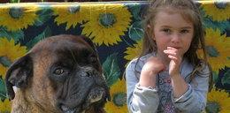 Pies uratował dziecko