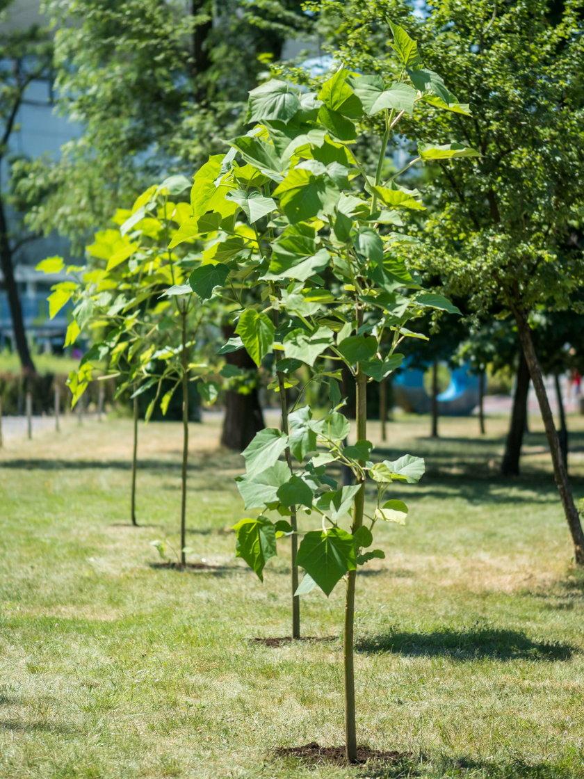Drzewa tlenowe w Manufakturze