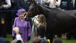 Koń Elżbiety II był na dopingu. Królowa w szoku