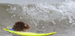 Jej dziadek też surfował