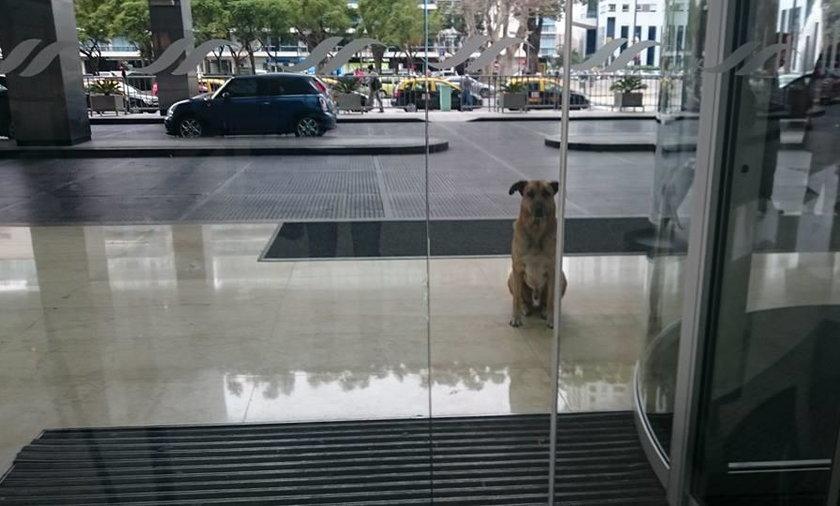 Zobaczyła przed hotelem bezdomnego psa. Nie uwierzysz, co zrobiła!