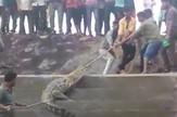 AP_zalutao_krokodil_indija_blic_vesti_safe