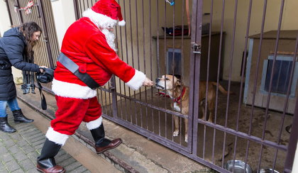 Mikołaj odwiedził bezdomne zwierzęta