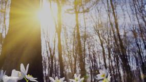 Przed nami najcieplejszy weekend tego roku! To już prawdziwa wiosna