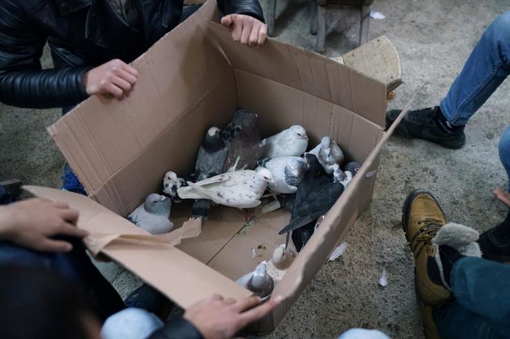 aukcija golubova03 foto Reuters