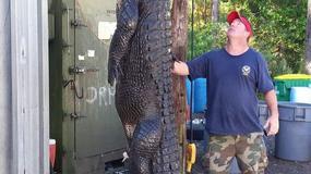 """Złapali aligatora giganta: """"Waży 350kg, polowaliśmy na niego kilka miesięcy"""""""