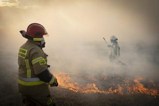 Pożar w Biebrzańskim Parku Narodowym. Instytut zbada, jakie są skutki dla przyrody