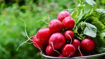 A hónapos retek növényvédelme
