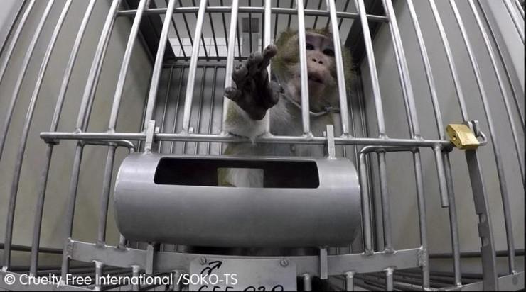 eksperimenti nad životinjama