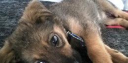 Nie żyje psina upita przez Romkę. Wytrzeźwiała, ale i tak odeszła...