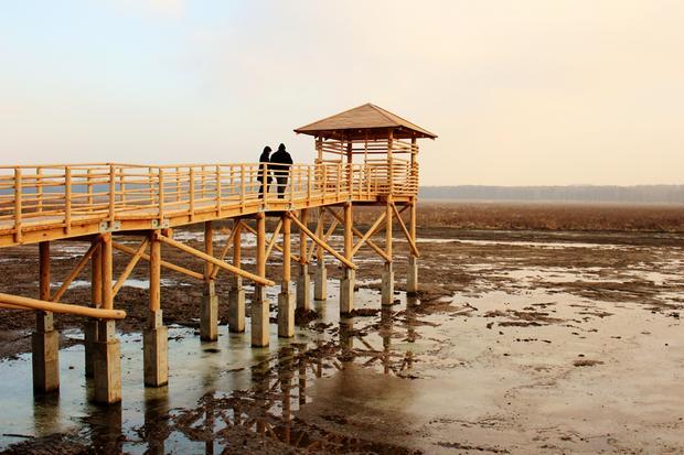 Rezerwat Łężczok koło Raciborza
