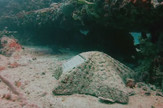 Podvodno groblje