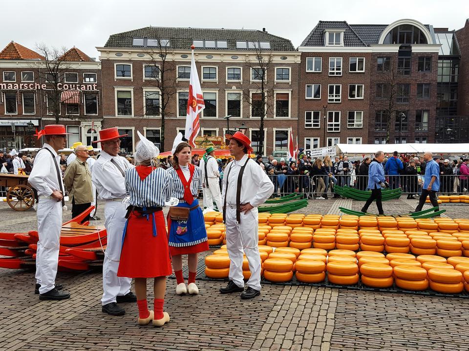 Festiwal sera w Alkmaar. Podstawą kuchni holenderskiej są właśnie sery oraz ziemniaki.