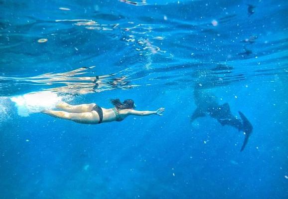 Maja pliva sa kit ajkulama