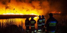 Śledztwo w sprawie podpalenia Biebrzy. Władze parku wyznaczyły nagrodę