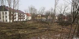 Okrutna rzeź w Milanówku. Pod piłami zginęło ponad 60 zdrowych dębów