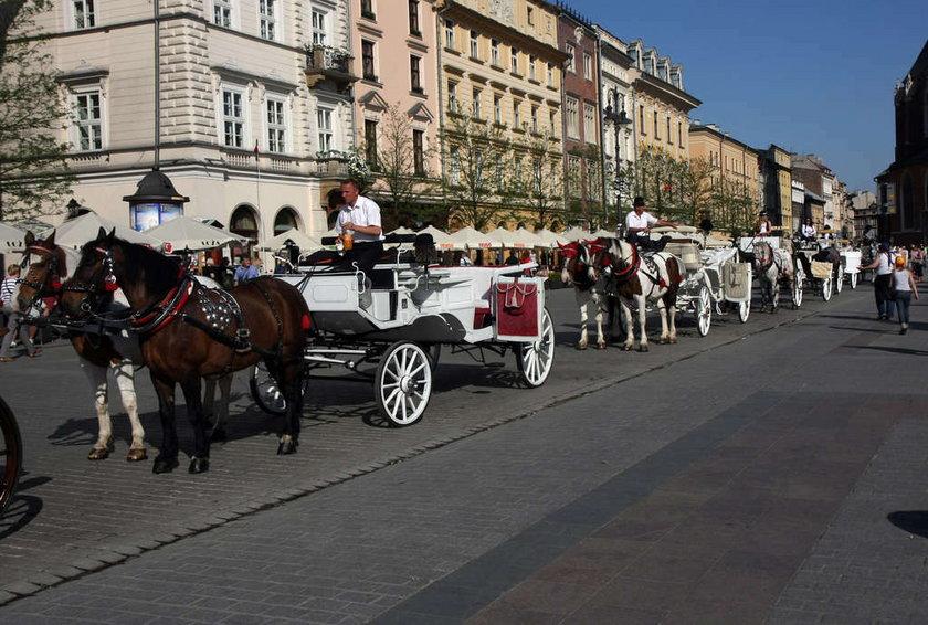 Konie na rynku w Krakowie