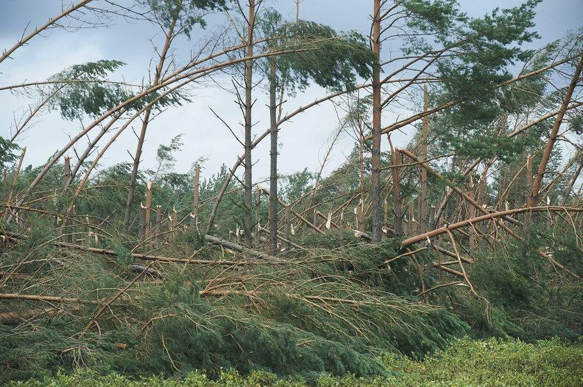 zniszczony las