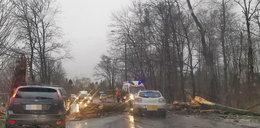 Wiatr szaleje po województwie łódzkim. Drzewa przygniatają samochody