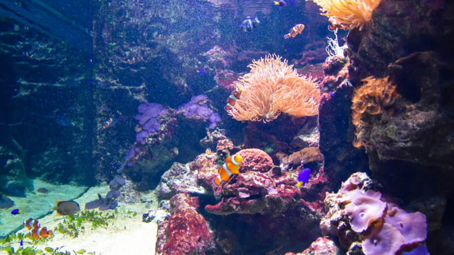Wielka Rafa Koralowa nie została sklasyfikowana jako zagrożona przez UNESCO