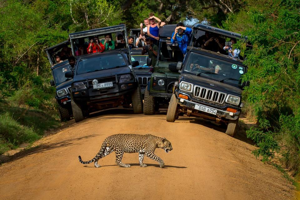 Park Narodowy Yala, Sri Lanka