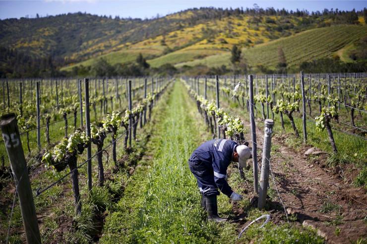 vinograd07_REUTERS_foto REUTERS