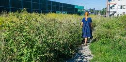 Nieskoszona trawa na Ruczaju. Mieszkańcy apelują do miasta