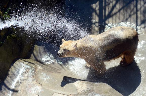 O higijeni medveda brine se svakodnevno