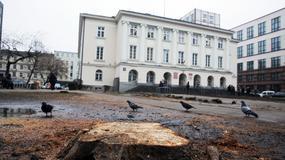Onet24: Kaczyński przeciw wycince drzew