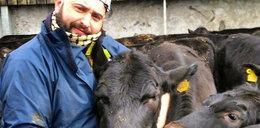 Weterynarz zaklina krowy. Śpiewa im operę