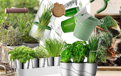 Pomysł Na Wiosnę I Zdrowie W Kuchni Zioła W Doniczce