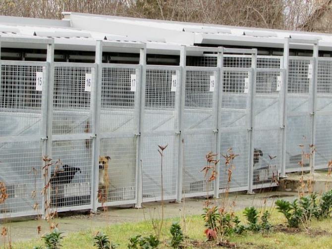 AZIL: U Prihvatilištu za napuštene pse i mačke u Subotici imaju sve što požele, ali im nedostaje više pažnje i ljubavi
