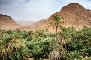 Maroko: Kolejne zatrzymania w związku z zabójstwem turystek