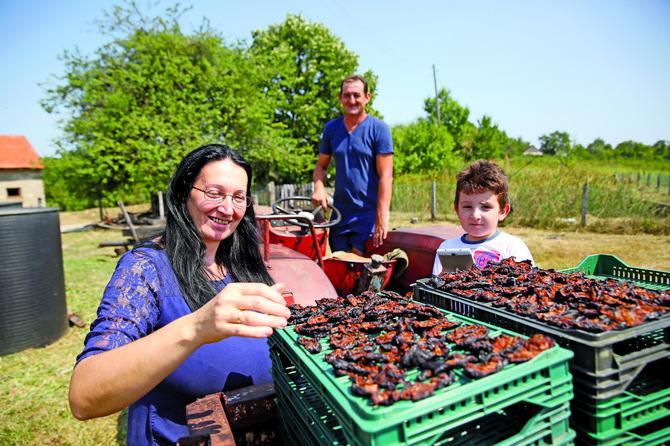Mnogo šljiva treba proturiti kroz ruke da bi se zaradilo za novi traktor