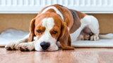 Patenty na czysty dom z psem