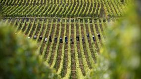Najstarsze wino śwata na aukcji we Francji
