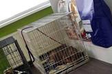 Uhvaceni psi Niš sterilizacija lutalica Foto Privatna arhiva