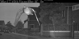 Gołąb złapany przez fotoradar. Będzie mandacik?