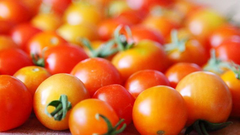 Naukowcy przywracają współczesnym pomidorom utracony smak
