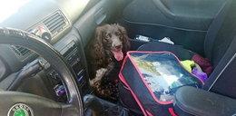 Pies konał w samochodzie. Nie uwierzysz, gdzie był właściciel!