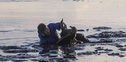Rzucił się do bagna, by ratować orła