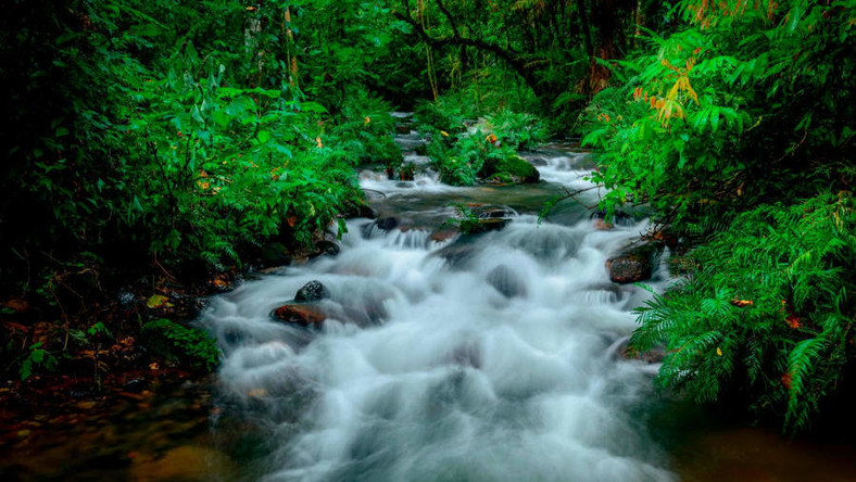 CNN's 25 most beautiful places in the world includes Bwindi Impenetrable Forest in Uganda (CNN)