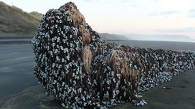 Dziwny obiekt na nowozelandzkiej plaży