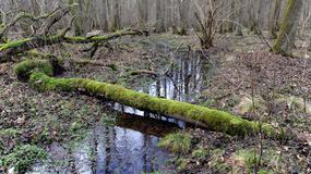 Nowo powstały rezerwat przyrody