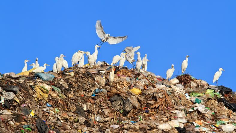 W Marszowie powstał nowoczesny zakład zagospodarowania odpadów