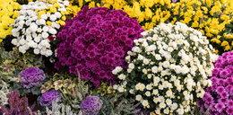 Z grobów jej bliskich znikały kwiaty. Kobieta miała dość