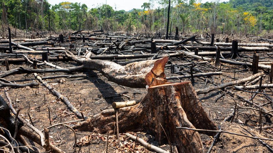 Degradacja Amazonii