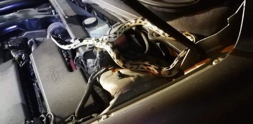 Otworzył maskę samochodu i zamarł. Chwile grozy w Żyrardowie