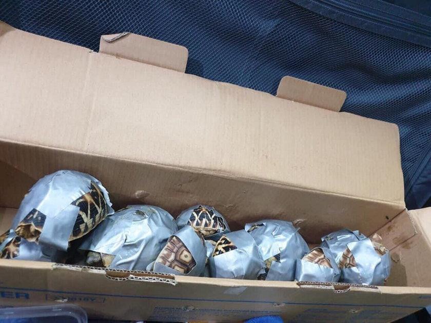 Celnicy znaleźli 4 torby na lotnisku. Gdy je otworzyli, przecierali oczy