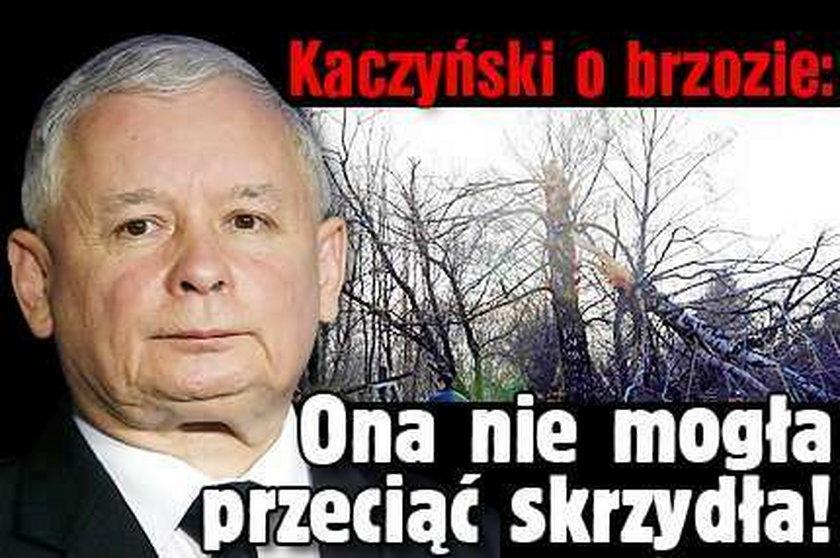 Kaczyński o brzozie: Ona nie mogła przeciąć skrzydła!